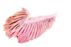 Branchie del pesce isolate fotografie stock libere da diritti