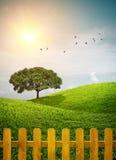 Branchie recintate dell'erba Immagini Stock Libere da Diritti