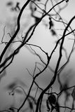 Branching. Abstract branches of the bush royalty free stock photography