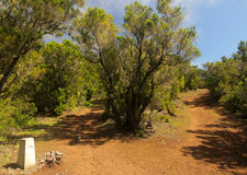 Branching forest footpath. In the rainforest in Garajonay national park, La Gomera, Canary Islands, Spain Stock Image