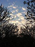 Branching tree. Big branching tree royalty free stock image