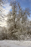 Branching tree covered with snow. On the side of the road on a background of blue sky and clouds royalty free stock images