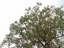 Branching of tree Stock Photos