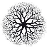 Branching (vector) royalty free illustration