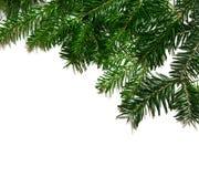 Branchlets del abeto Fotografía de archivo libre de regalías