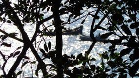 Branchs和小船海上 库存图片