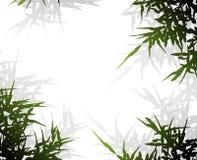 branchs绿色影子 免版税库存图片