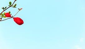 Branchs και μπλε ουρανός Στοκ φωτογραφίες με δικαίωμα ελεύθερης χρήσης