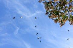 Branchs дерева и голубое небо Стоковая Фотография RF