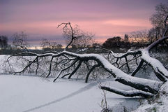 Branchs av treen Arkivbilder