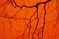 Branchs dans le crépuscule Photos libres de droits