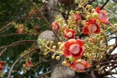 Branchs de la flor y del brote del obús Imagen de archivo libre de regalías