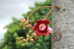 Branchs de la flor y del brote del obús Imágenes de archivo libres de regalías
