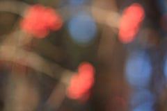 Branchs des Ebereschenbaums mit Unschärfeeffekt Stockfoto