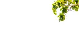 Branchs e céu Fotos de Stock Royalty Free