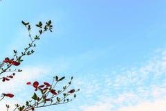 Branchs e céu azul Fotografia de Stock
