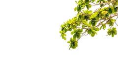 Branchs e céu azul Imagem de Stock Royalty Free