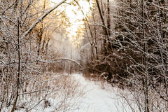 Branchs ed alberi in neve road3 Fotografie Stock Libere da Diritti