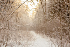 Branchs ed alberi in neve road2 Fotografie Stock Libere da Diritti