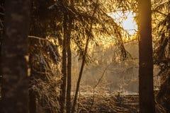 Branchs en bomen in sneeuw road_4 Royalty-vrije Stock Fotografie