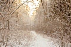 Branchs en bomen in sneeuw road2 royalty-vrije stock foto's