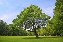 branchy разбивочные стойки парка клена стоковые изображения