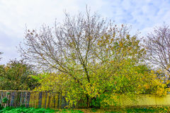 Branchy Colorful Tree with Fence in Autumn Stock Photos