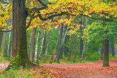 Branchy oak trunk on a hill Stock Photo