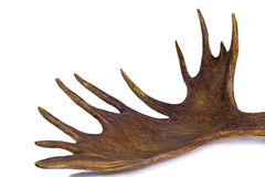 Branchy stort horn av älgen på en vit bakgrund. Royaltyfri Bild