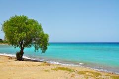 Single tree on the coast. Branchy tree on the seashore Royalty Free Stock Photography