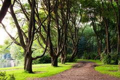 Branchy trees in park Royalty Free Stock Photo