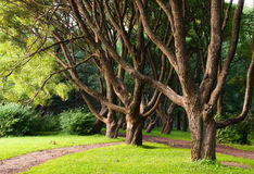 Branchy trees in park Stock Image