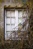 Branchy Window Stock Photos