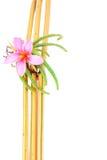 Branco Backround de Vera And Yellow Bamboo With do aloés Fotografia de Stock