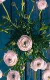 Branco/cor-de-rosa/Ranonkels/ranúnculo/flores/Bloemen/botão de ouro persa imagem de stock