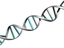 Branco da corda do ADN siolated Imagens de Stock
