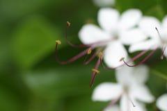 Branco da flor imagens de stock