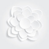 Branco da flor Fotografia de Stock Royalty Free