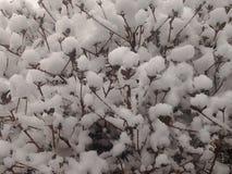 Branco da neve Fotografia de Stock