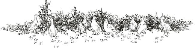 Branco da perdiz, polar ilustração do vetor
