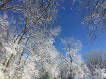 Branco do inverno Imagens de Stock