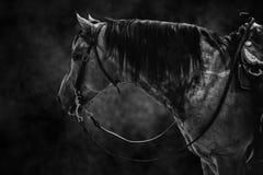 Branco do preto do cavalo fotografia de stock royalty free