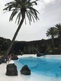 Branco dos azul-céu da pedra da água da palma Foto de Stock Royalty Free