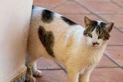 Branco e gato de gato malhado com coração do amor na pele no lado da barriga fotos de stock