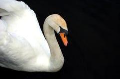Branco e preto Fotografia de Stock Royalty Free