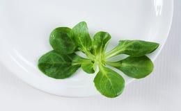 Branco e verde Fotos de Stock