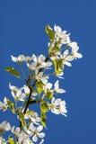 Branco no azul Foto de Stock Royalty Free