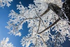 Branco no azul Imagem de Stock Royalty Free