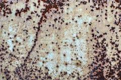 Branco oxidado placa de metal pintada Imagens de Stock