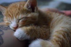 Branco pequeno e laranja do gato malhado da vaquinha imagem de stock
